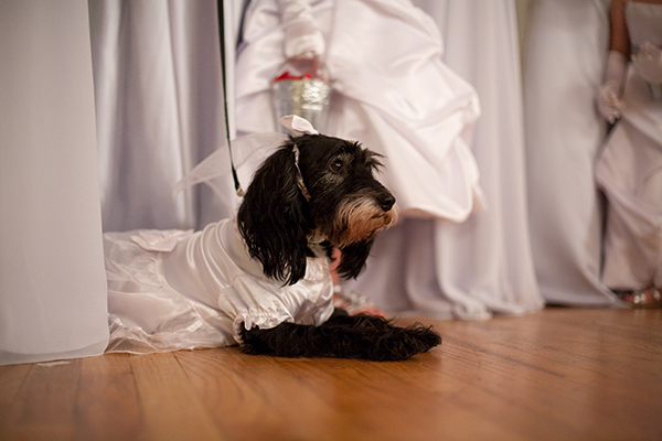 wedding flower dog